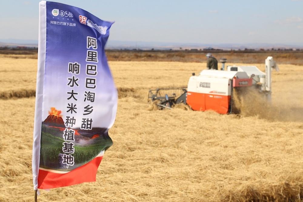 位於黑龍江省牡丹江市的響水大米種植基地,是阿里巴巴集團首批建設的數碼糧倉基地之一。