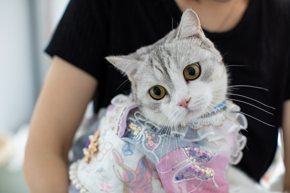 中國的寵物市場正在快速增長,寵物用品的類別百花齊放,包括衍生寵物漢服潮流。