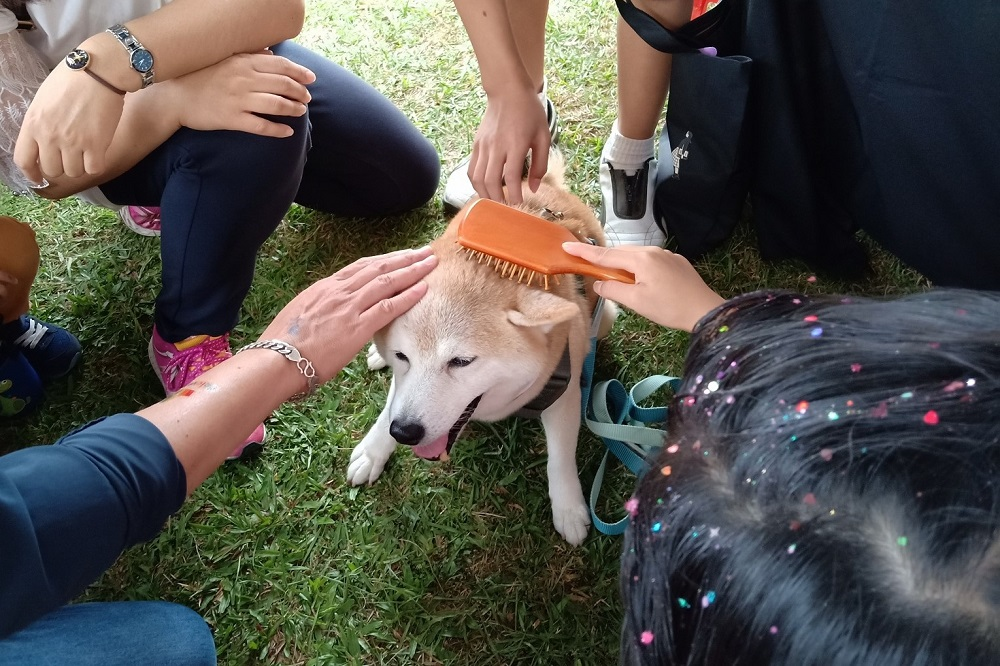 阿里巴巴集團攜手台灣狗醫生協會宣傳愛護動物理念。