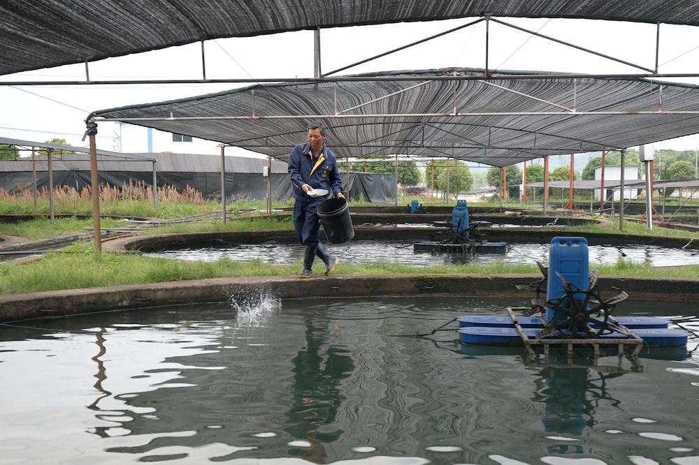 徐建成原是千島湖附近一個村莊的村民,以造船為生,15年前和妻子一起進入卡露伽,開始接觸鱘魚養殖。