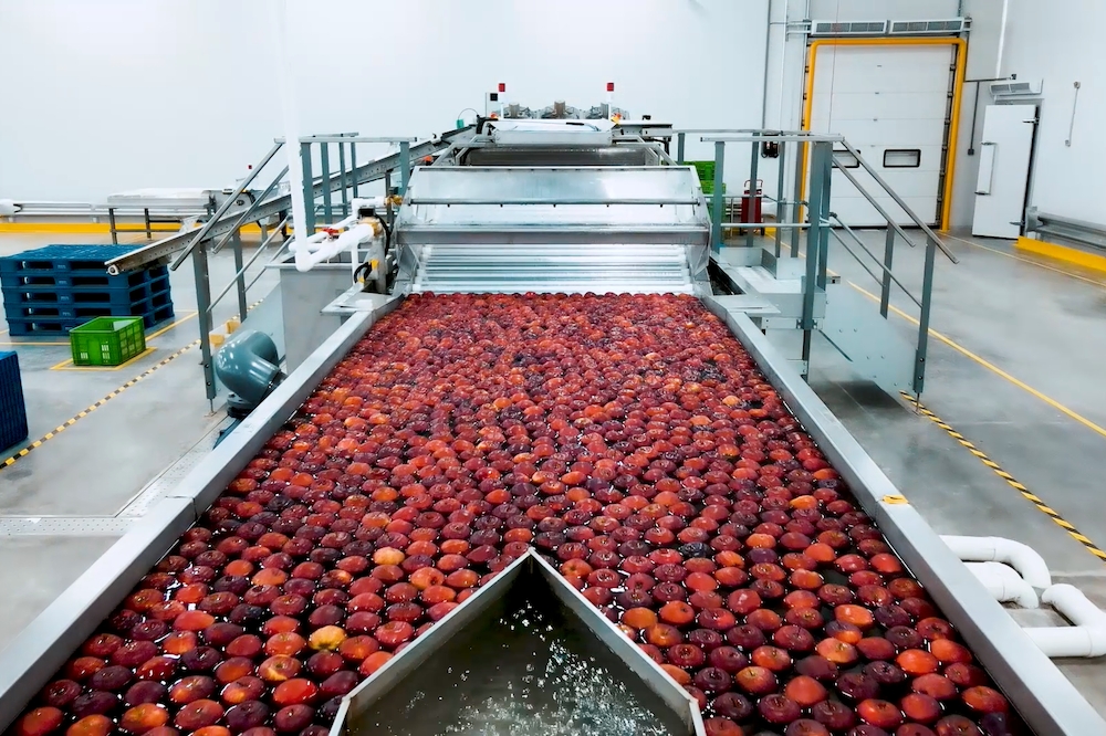 在西安倉,一顆蘋果要成為商品,需要經過需要歷經上料、清洗、分級、套袋裝箱、封箱等主要環節。