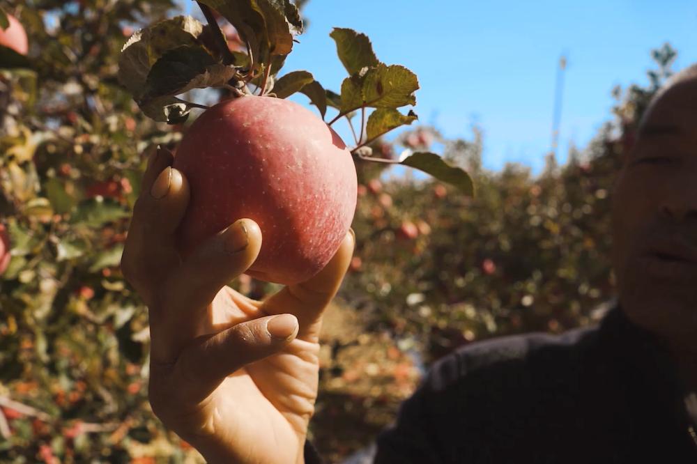產地倉對蘋果的質量檢測數據形成大數據分析後,可以幫助農民種出品質更穩定的蘋果,讓果農和消費者都受益。