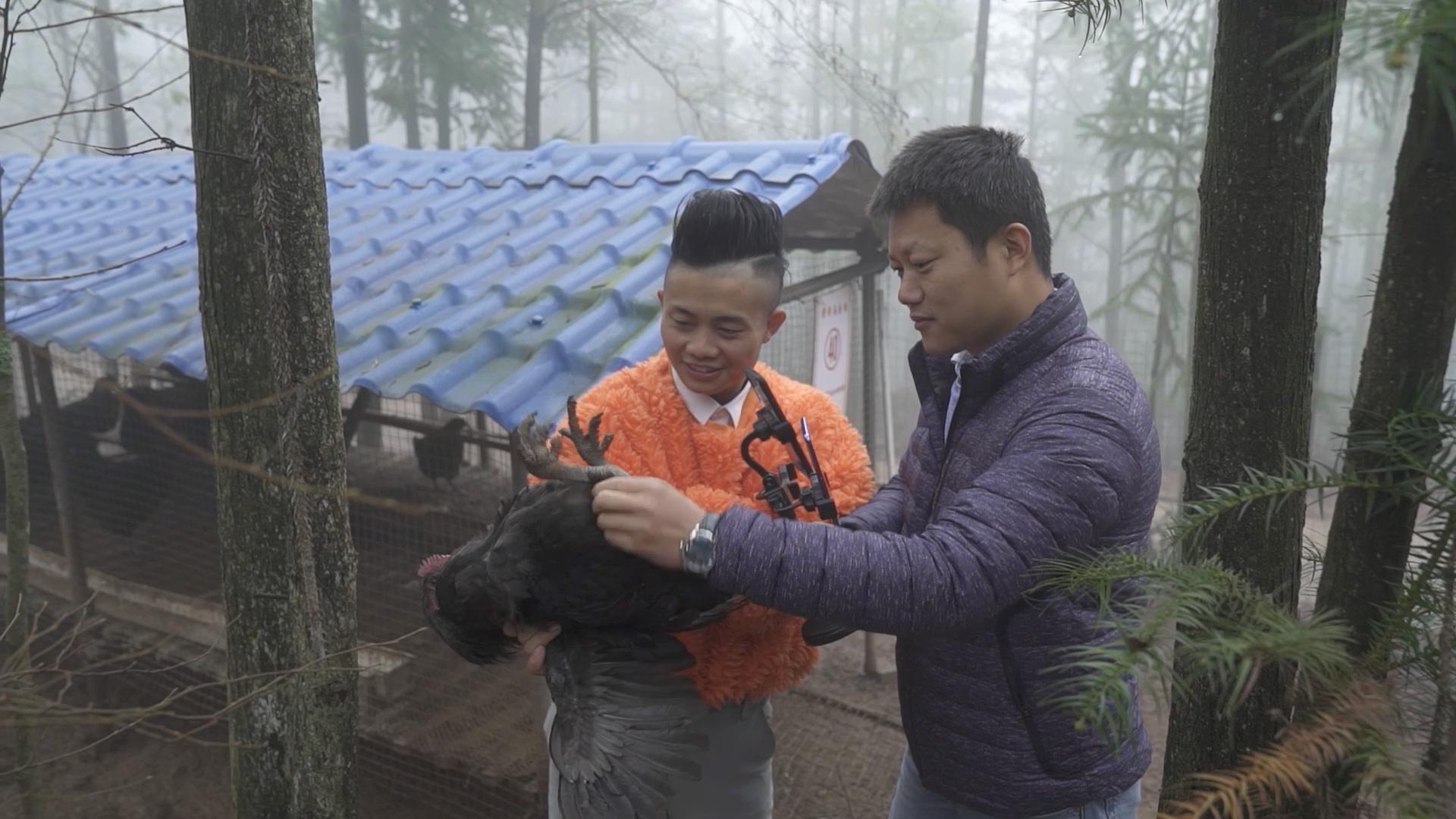 李榮富和阿里巴巴特派員牛少龍在淘寶直播賣烏雞。