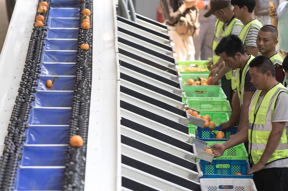 菜鳥在農產品產地建設的上行物流中心