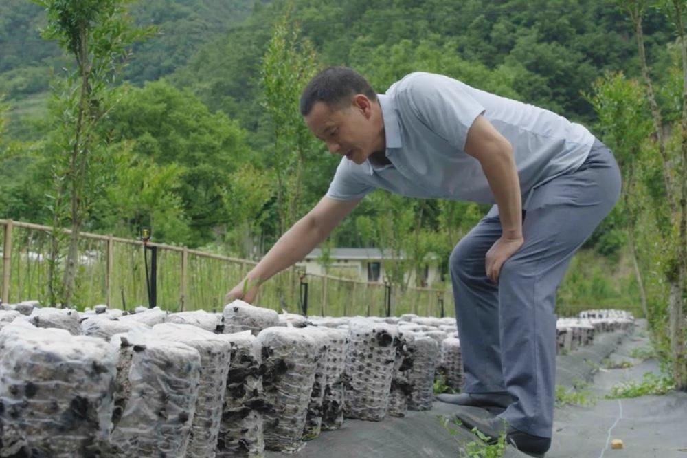 柞水縣金米村村民陳慶海最近幾年開始承包種植木耳,生活條件得到了很大改善。