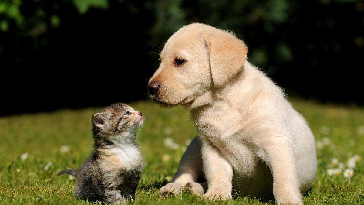 pet-economy-pet-parents-in-china