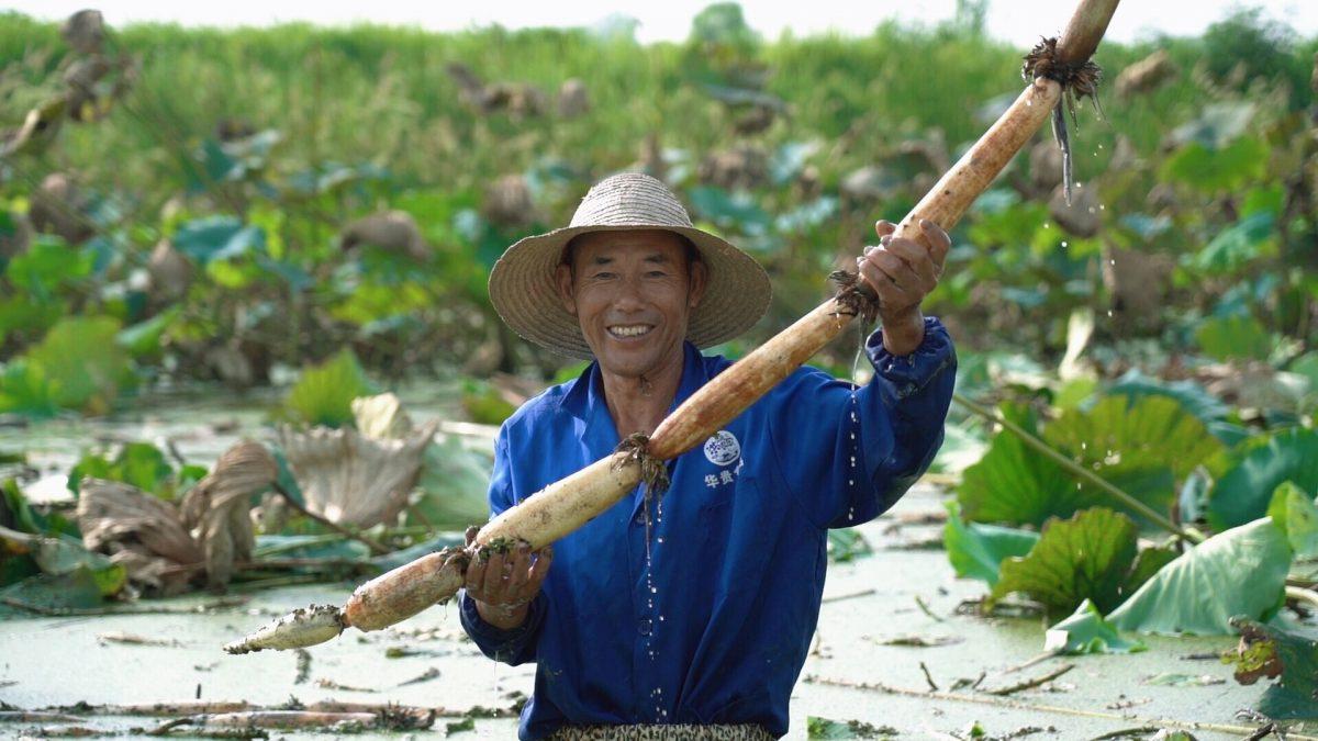 Honghu-lotus-farmer-festival-panen-alibaba