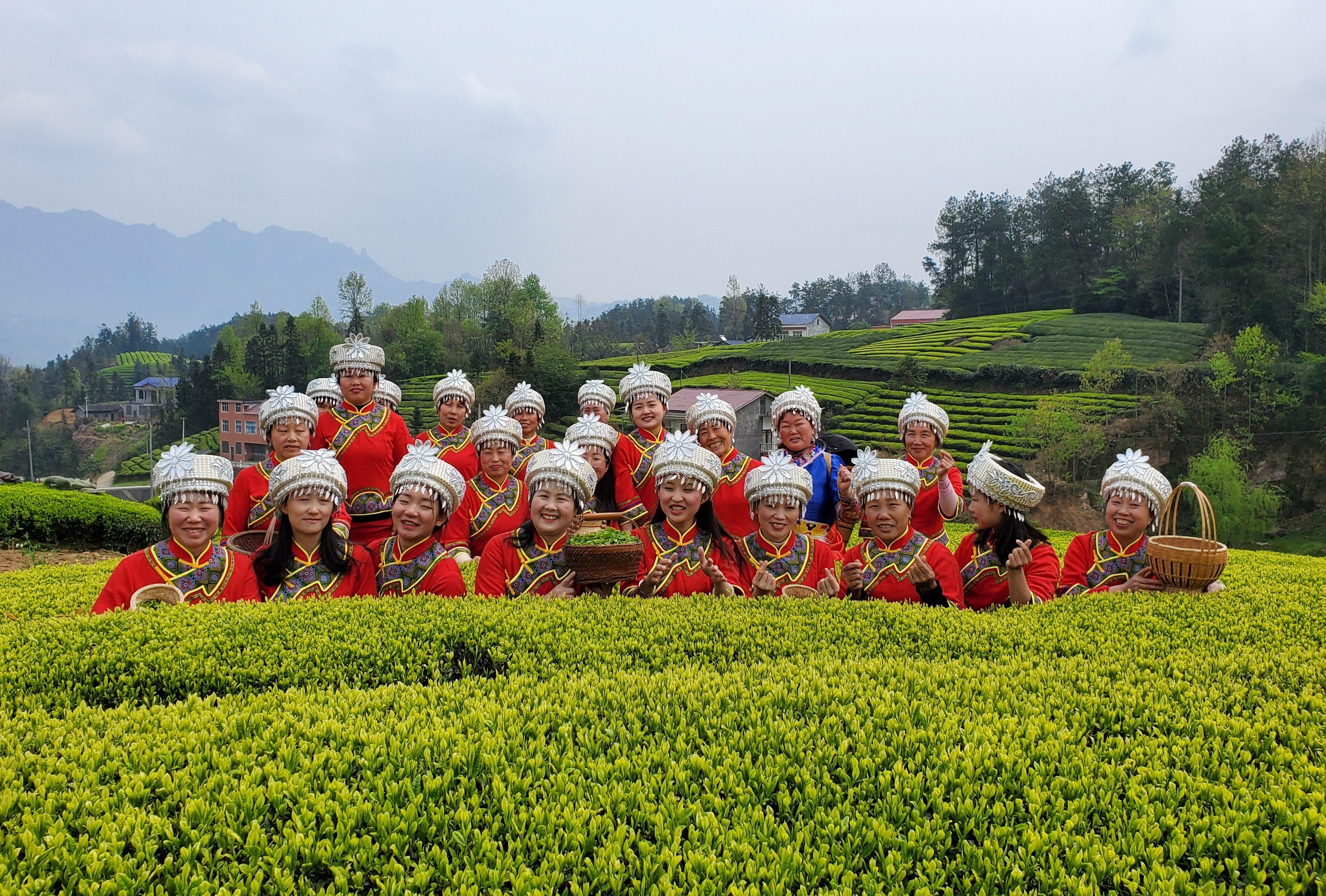 農村部にも広がるデジタル化の輪、お茶農家がライブコマースで販路開拓
