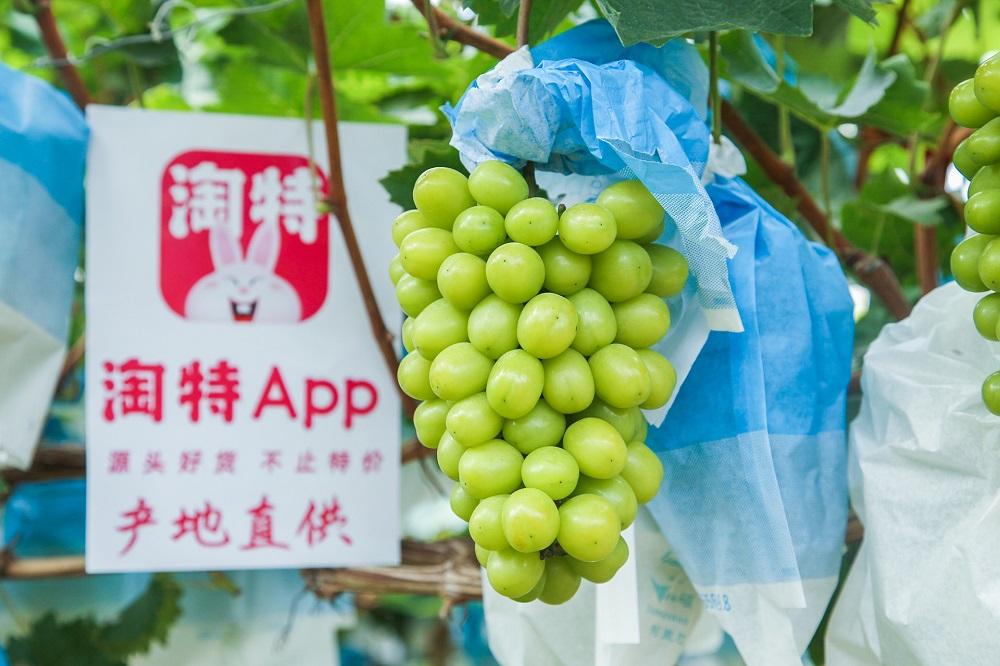 農家と消費者をダイレクトに結ぶ!デジタルで導く中国農業の産業化